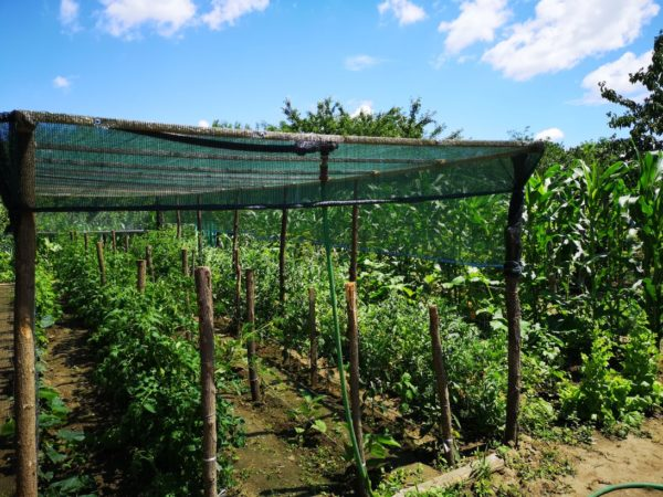 Rural Romania: Vegetable Garden