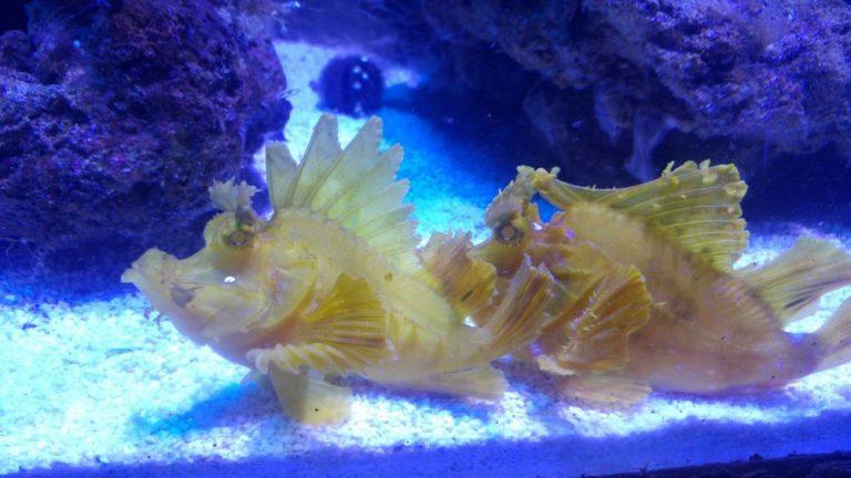 aquarium constanta