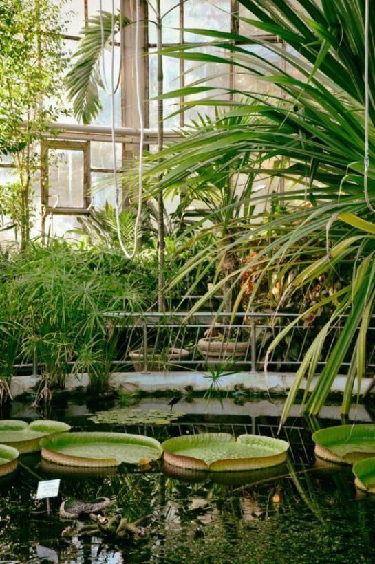 botanical garden alexandru borza