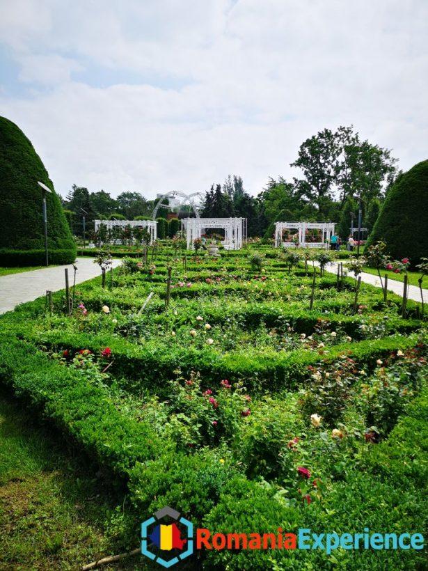 botanical garden timisoara