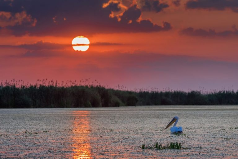 danube delta in summer